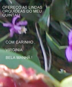 MINHAS ORQUÍDEAS (1)
