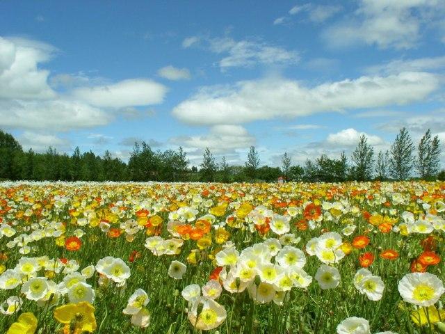 primavera-foto